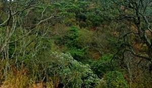 ngorongoro green