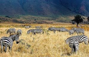 Ngorongoro-wildlife