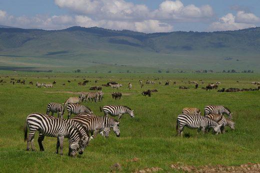 ngorongoro animals